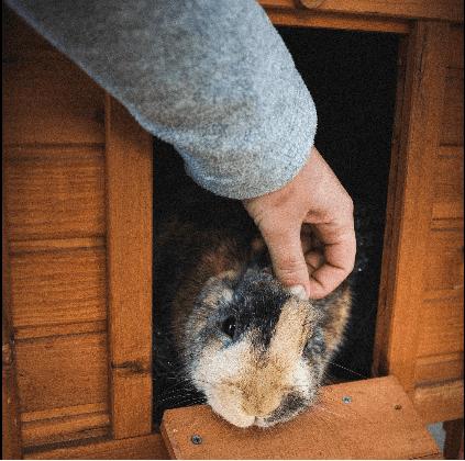 lapin dans cage maison Trixie Natura
