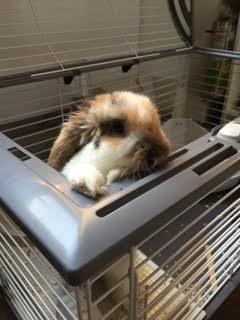 lapin dans cage ferplast casita